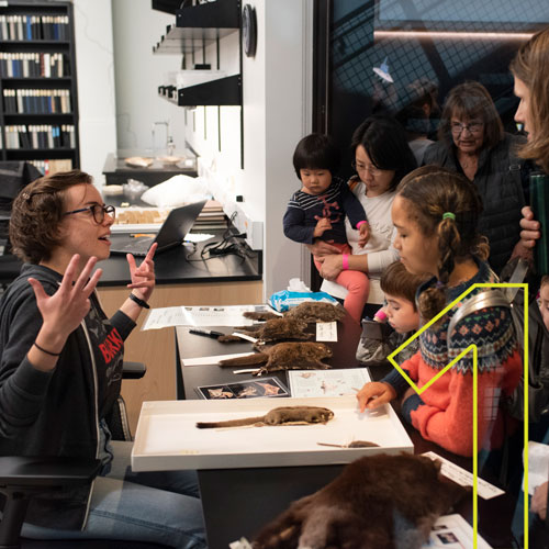 a woman talks to visitors with mammal specimens on the table between them