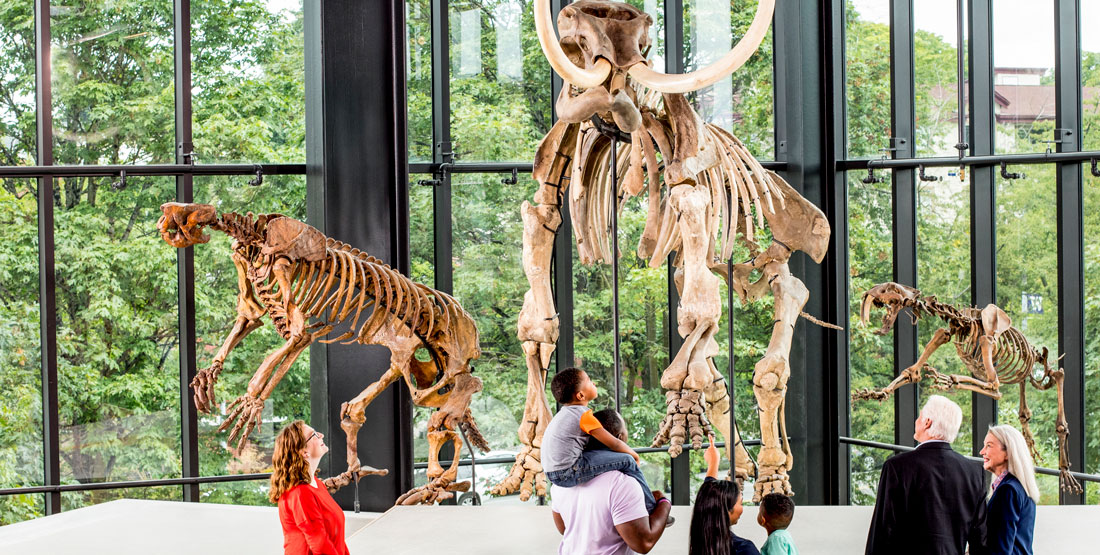 several groups of museum visitors look up at a large saber-toothed cat and mammoth in the new paleontology gallery