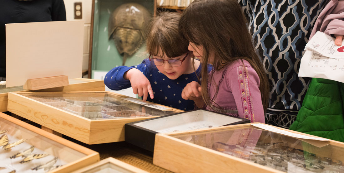 two little girls look at butterflies in display cases