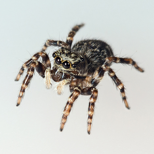 A view of a live female spider