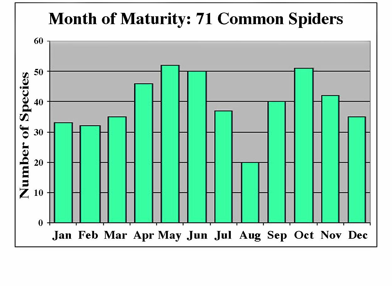 a chart showing each month of maturity for 71 common spiders in western Washington