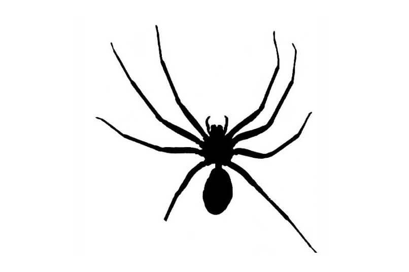 An incorrect drawing of a brown recluse spider
