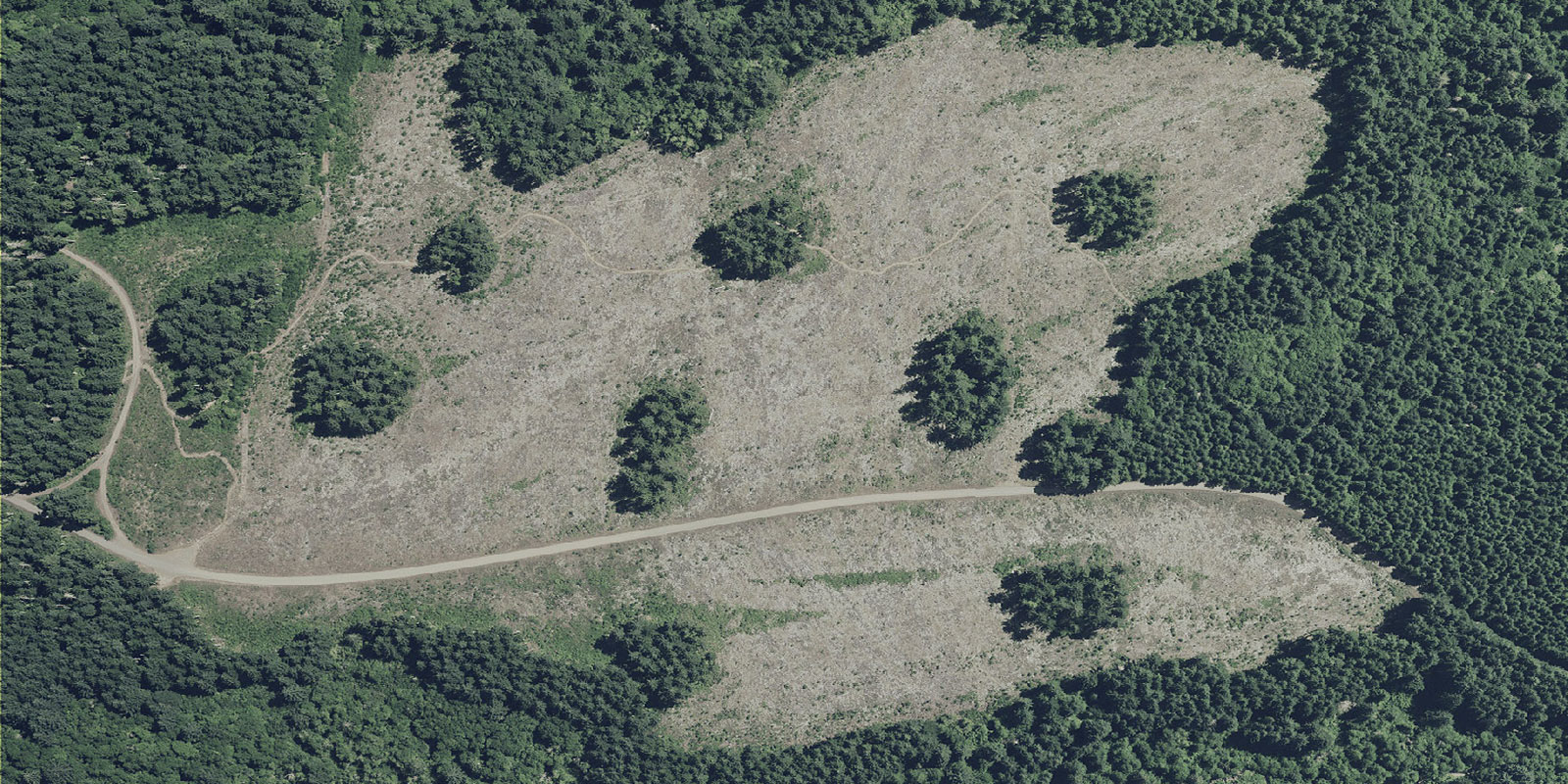Aerial view of aggregated retention logged lands, which leaves patches of undisturbed trees.
