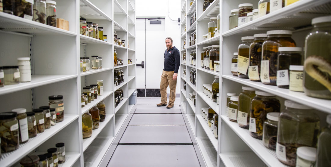 a man stands at the far end of an open collection row with hundreds of glass jars on shelves