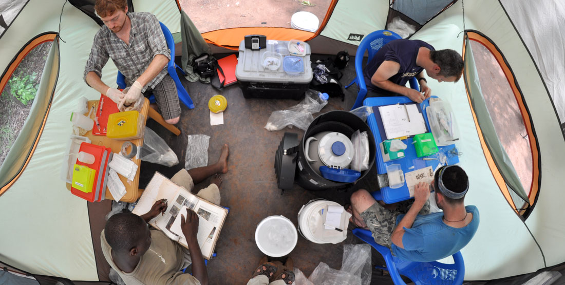 a team sits in a tent while processing lizard specimens in the field