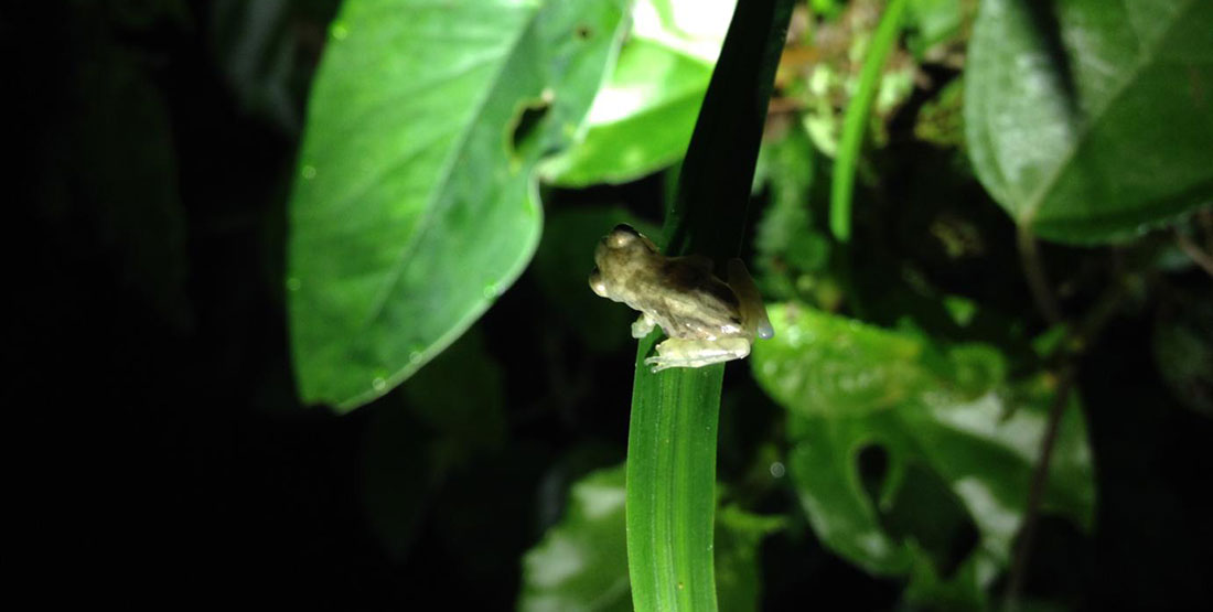 small frog perched on the tip of thin green leaf