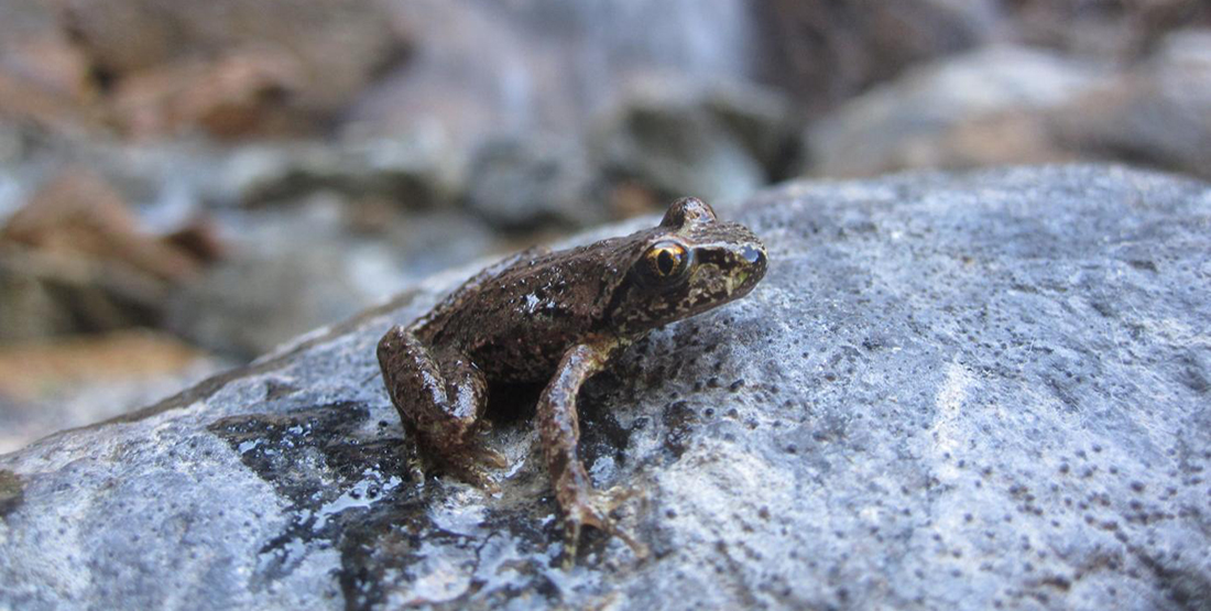 close up of a frog on a rock