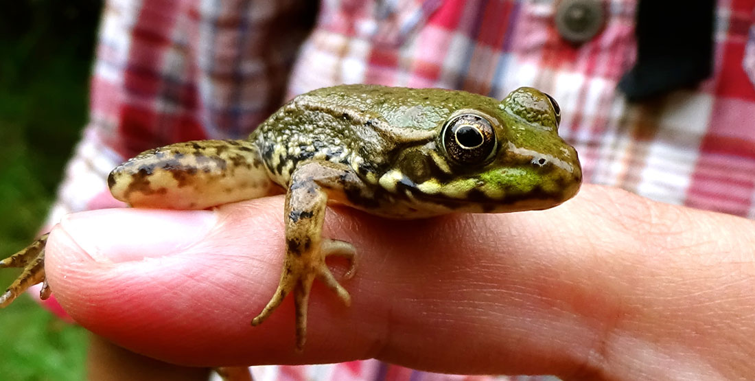 All About Frogs | Burke Museum