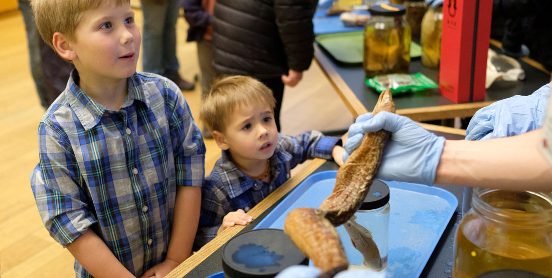two young boys looks closely at a preserved fish specimen being held by a staff member wearing gloves