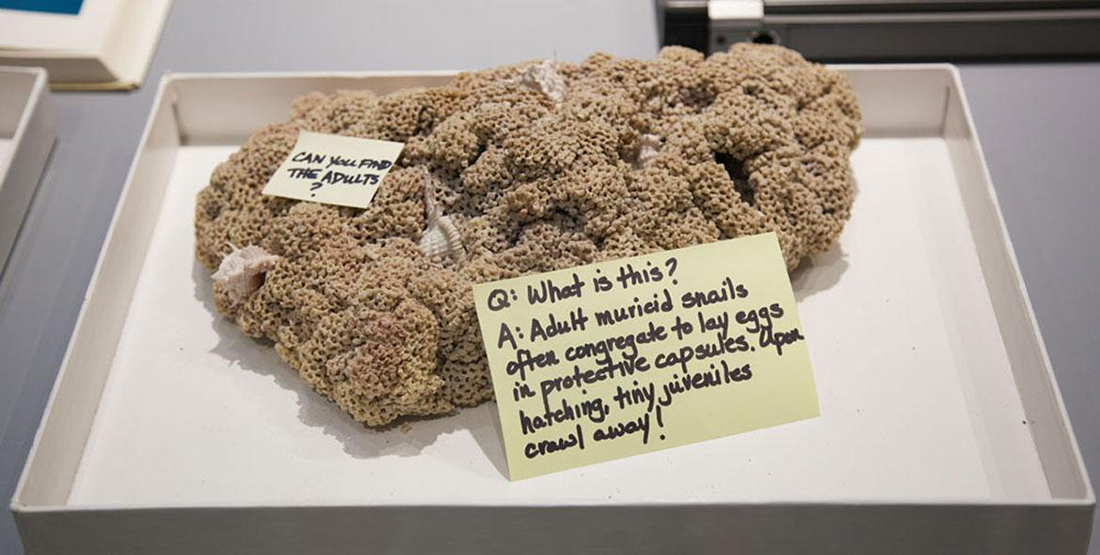 Large group of rock snailes in a capsule with post-it note explaining what it is