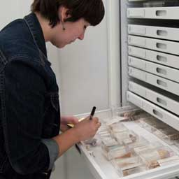 a volunteer opens a drawer to the malacology collection and writes a label