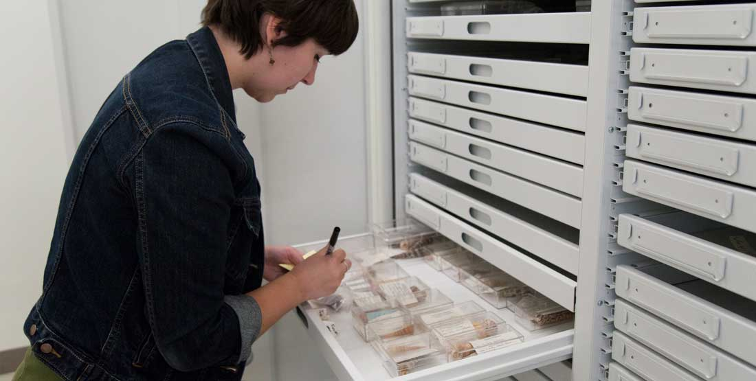 a volunteer stands next to an open collection drawer filled with shells and uses a pen to write a label