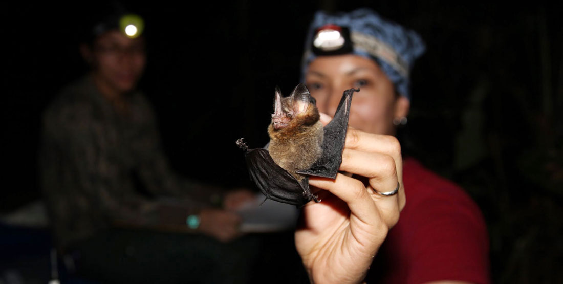 a woman wears a head lamp at night and holds a bat in her hand during a field test