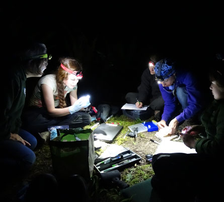 a group of women use head lamps while collecting data on bats in the field