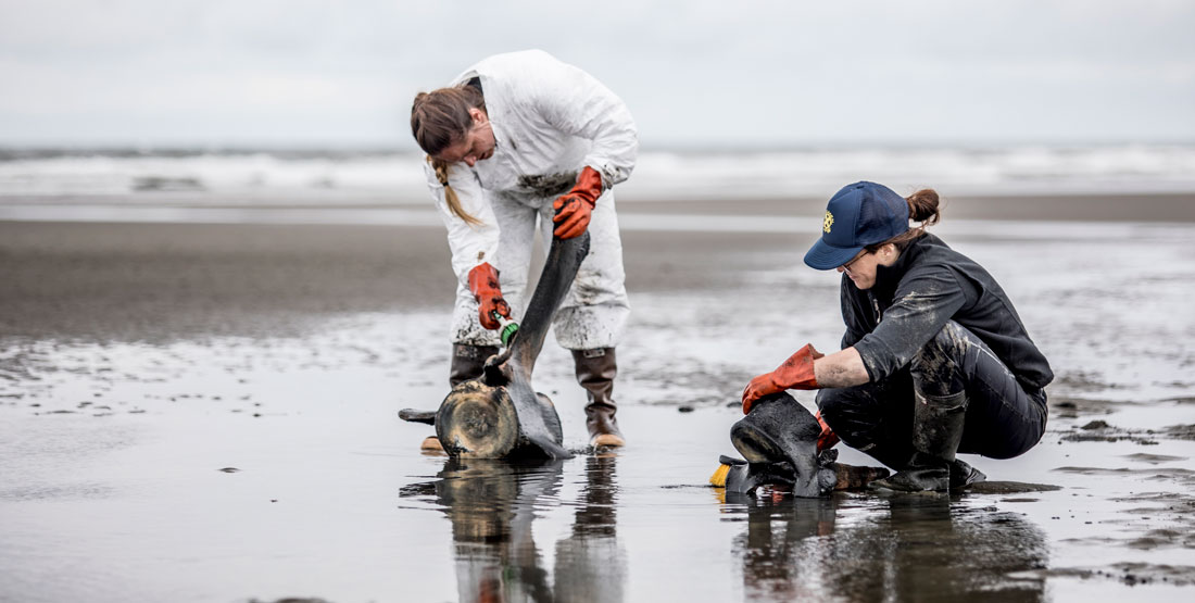 two women clean whale vertebrae on the beach