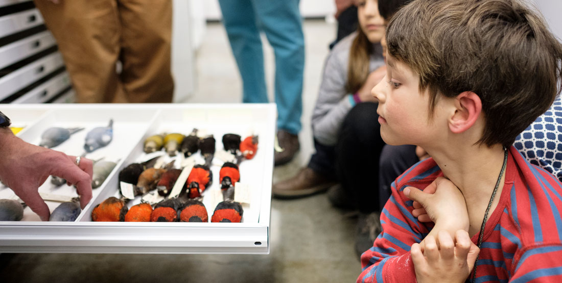 a young boy peers into an open drawer filled with bird specimens