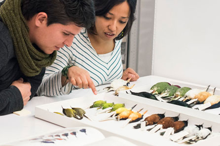 a woman and man look closely at colorful bird specimens in the collection