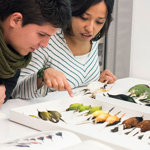 a man and woman look closely at bird specimens in the collection