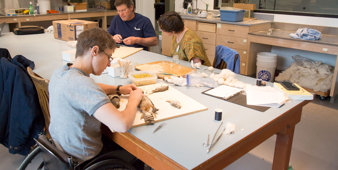 three people sit around a table while prepping bird specimens