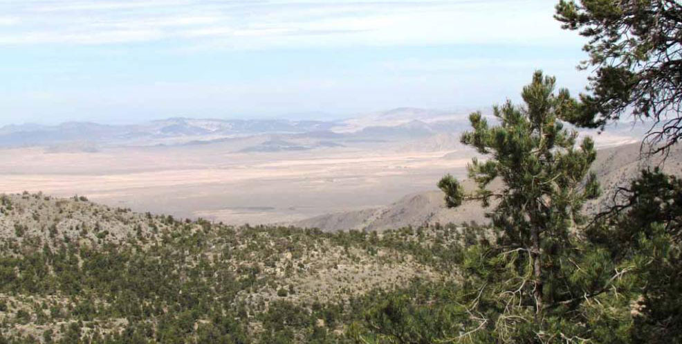 expansive view of the desert with forests in the background