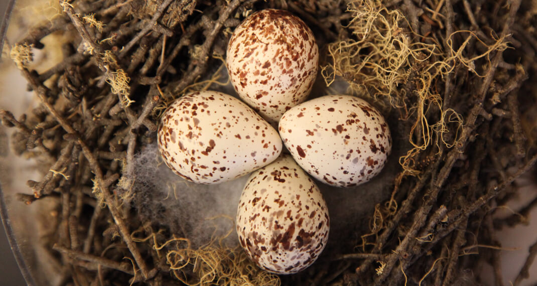 four speckled bird eggs sitting in a nest