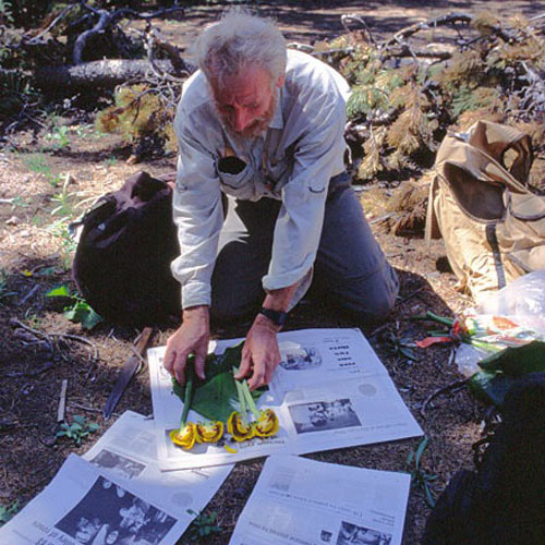 a man places flowering plants between sheets of newspaper to dry