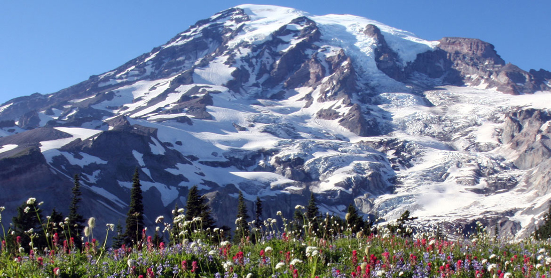 Mt. Rainier with wildflowers pictured