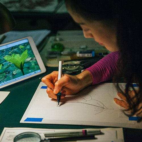a woman illustrates a plant while looking at the actual specimen on an iPad