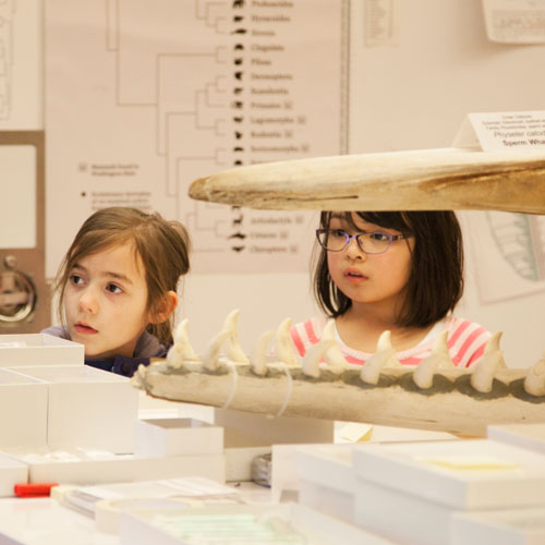 campers learn about mammal specimens