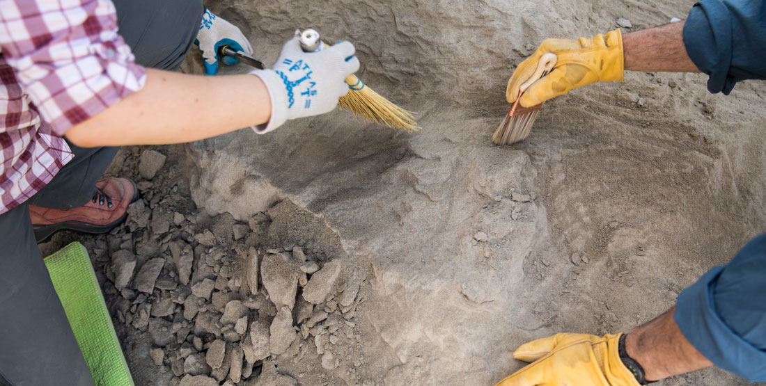 close up of dig field school participants' hands digging up fossils