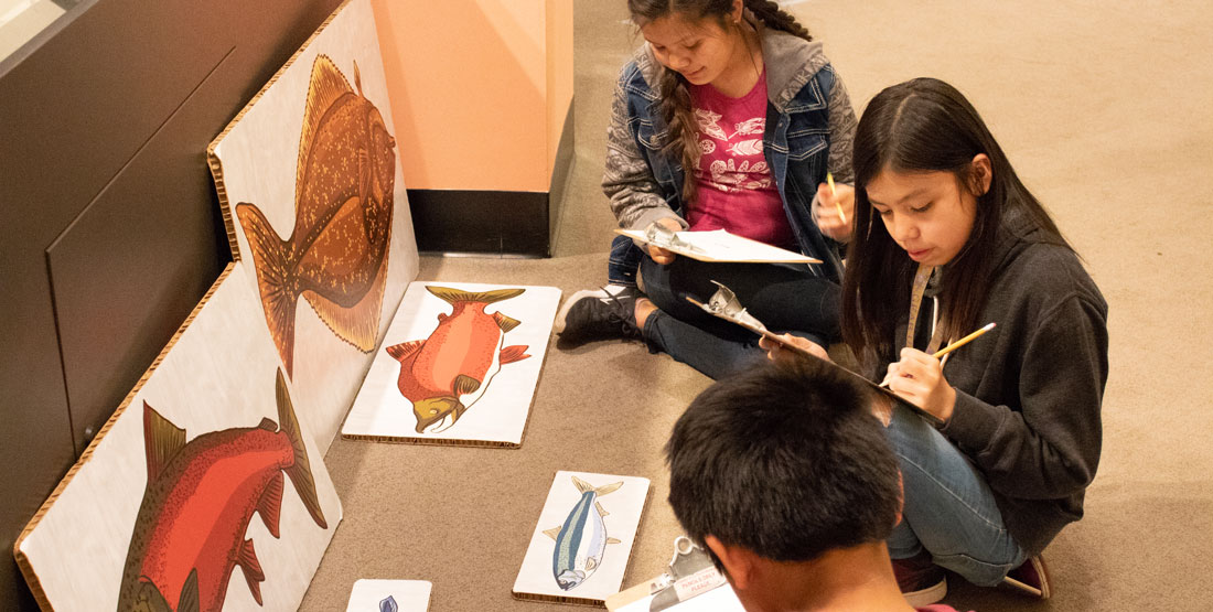 three students sit in front of pictures of fish and use clipboards to draw them