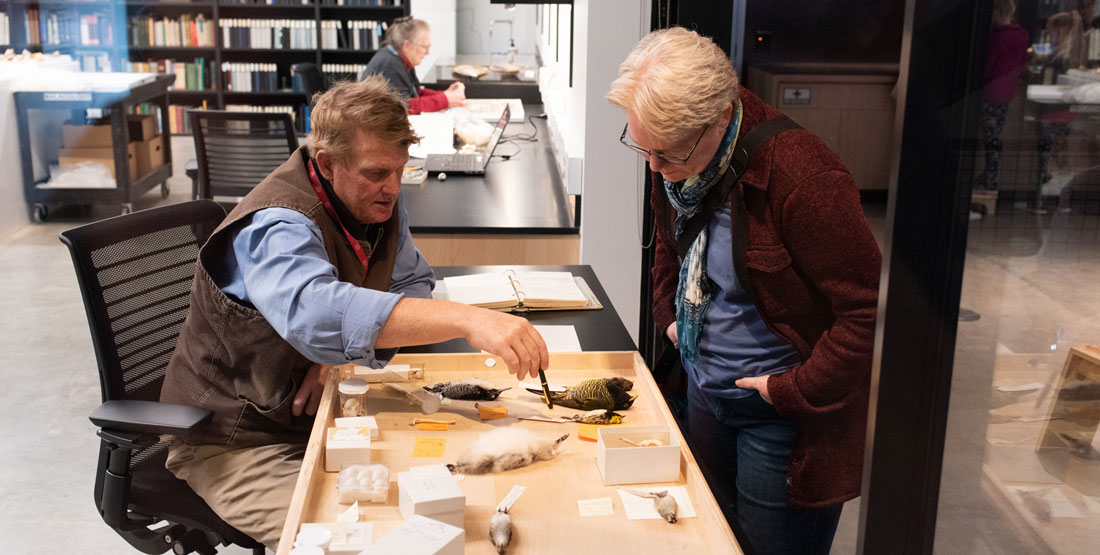 a staff member works on bird specimens and talks to a visitor at the door of the collection workroom