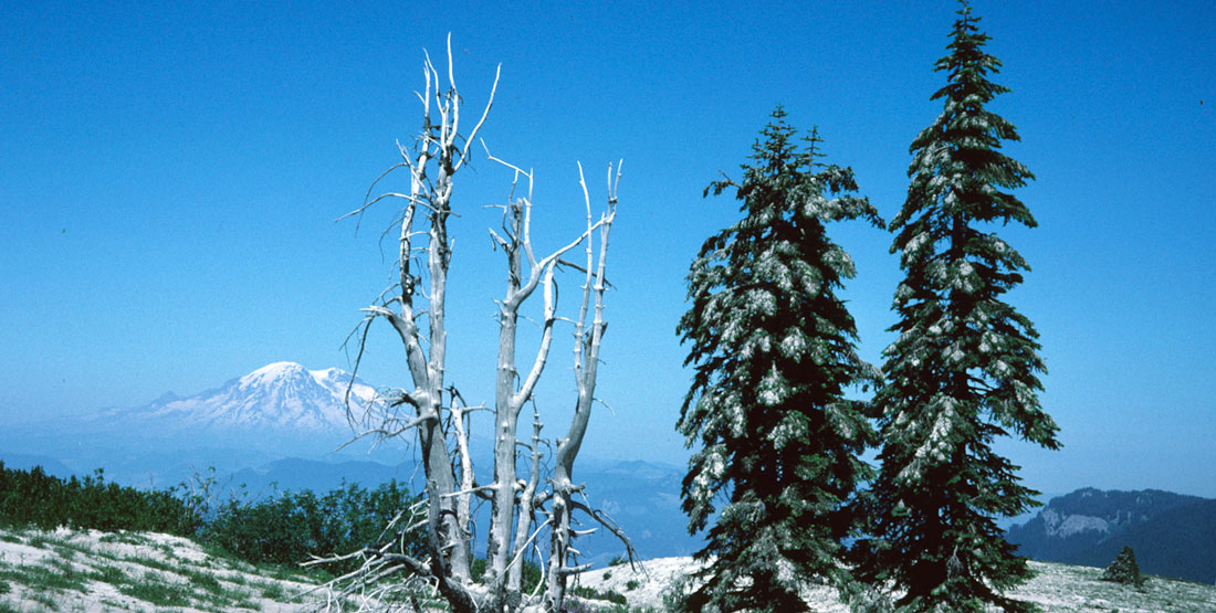 Tephra on trees with mountain in the background