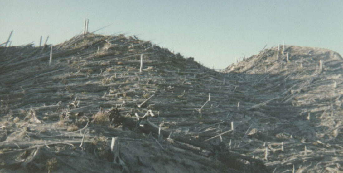 Trees fallen and ash on a slope of a mountain