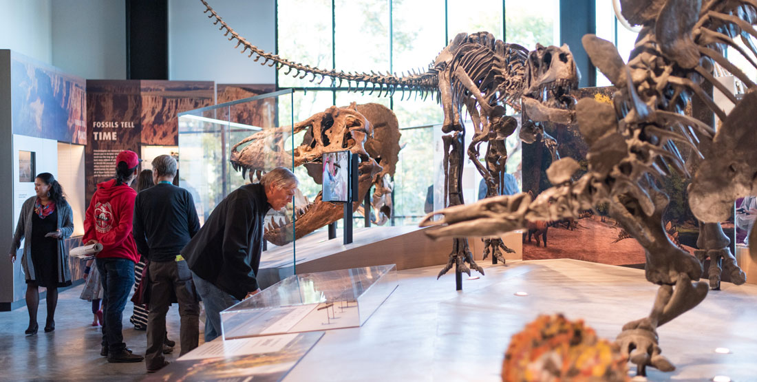 a group of people look at dinosaur exhibits and other fossils