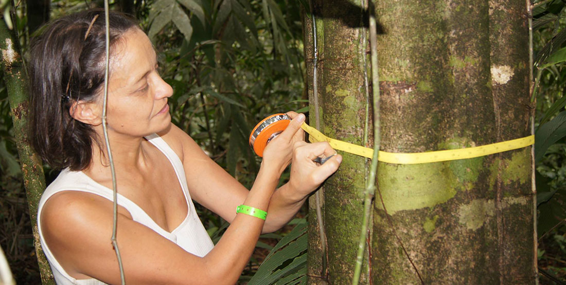 a young woman wraps a tape measure around a tree trunk