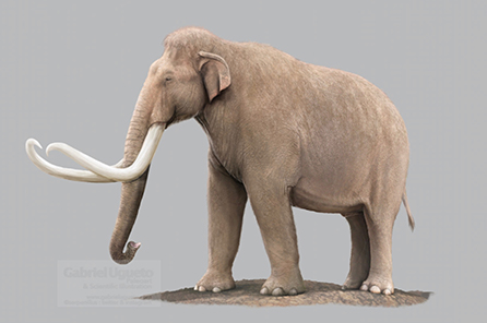 A paleoillustration of the Columbian Mammoth.
