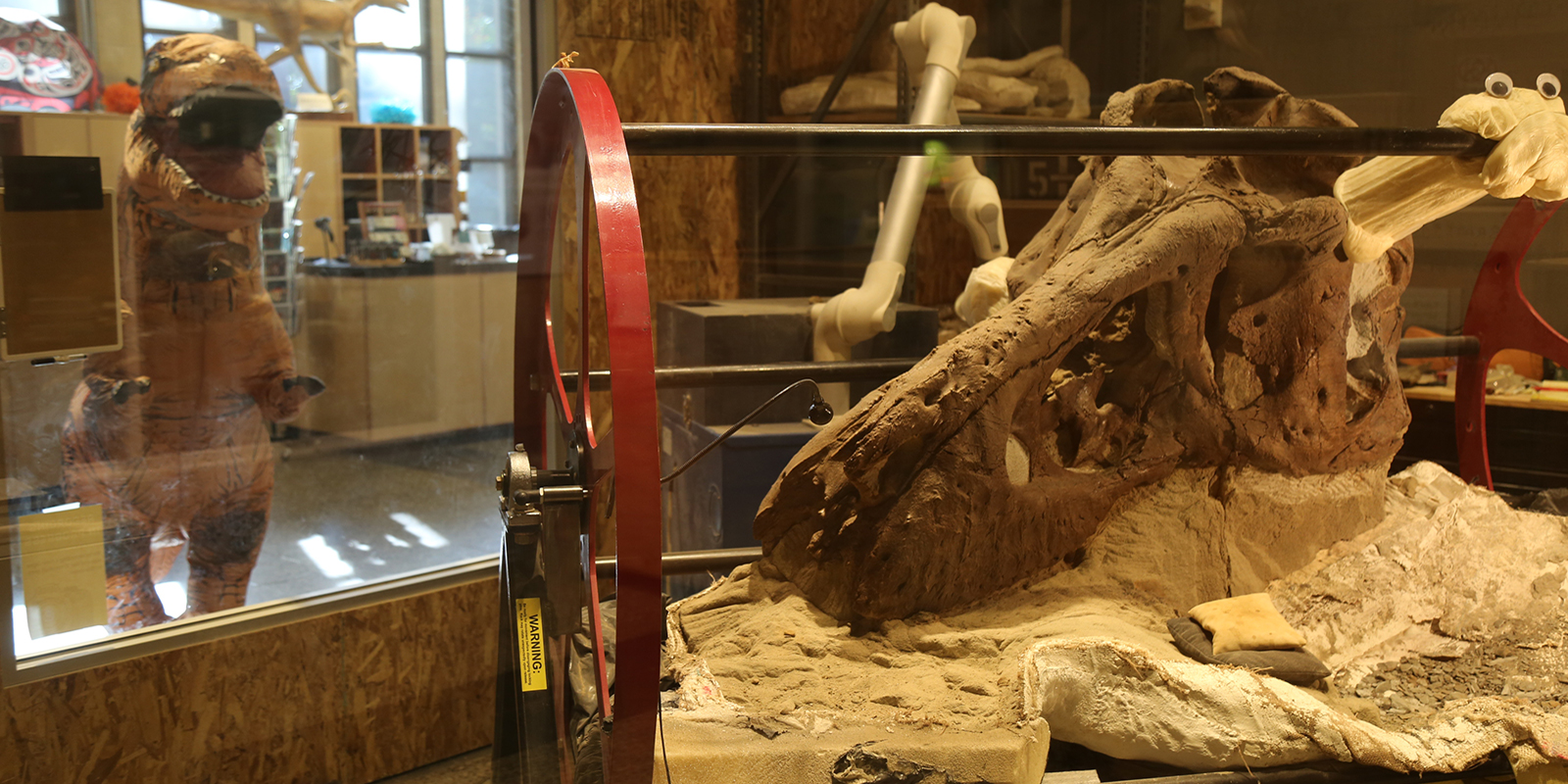The T. rex skull in the foreground with a person dressed in an inflatable T. rex costume in the background