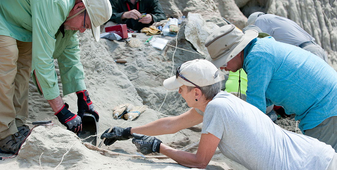 Burke volunteers use paintbrushes to remove dirt from bone at the dig site