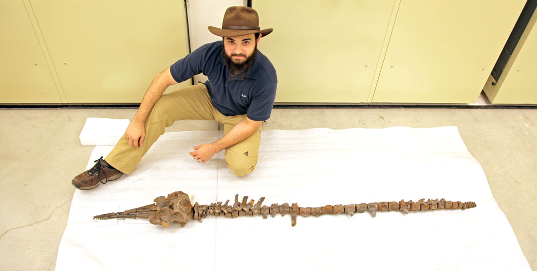 a man kneels next to the skeleton of a fossilized dolphin laid out on the floor