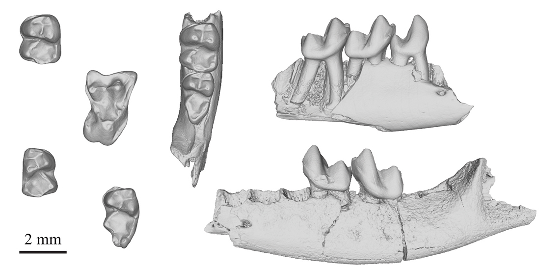 A series of scanned fossil teeth and jaw bones