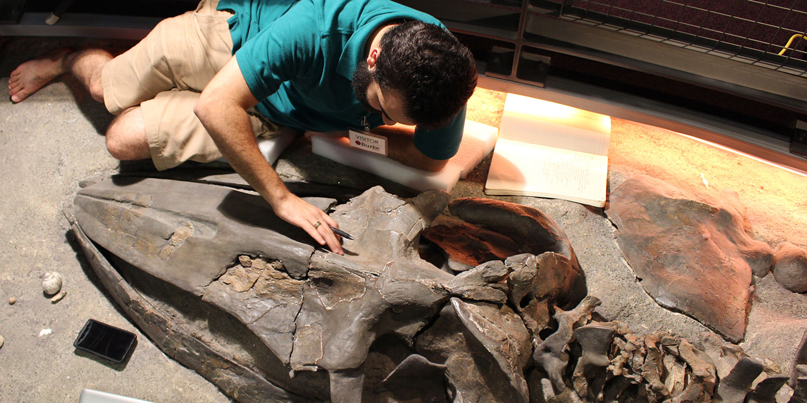 a young man lays next to a fossilized whale skeleton to examine it closely