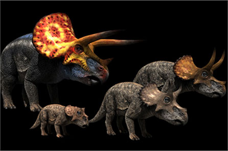 computer rendering of triceratops skulls for comparison