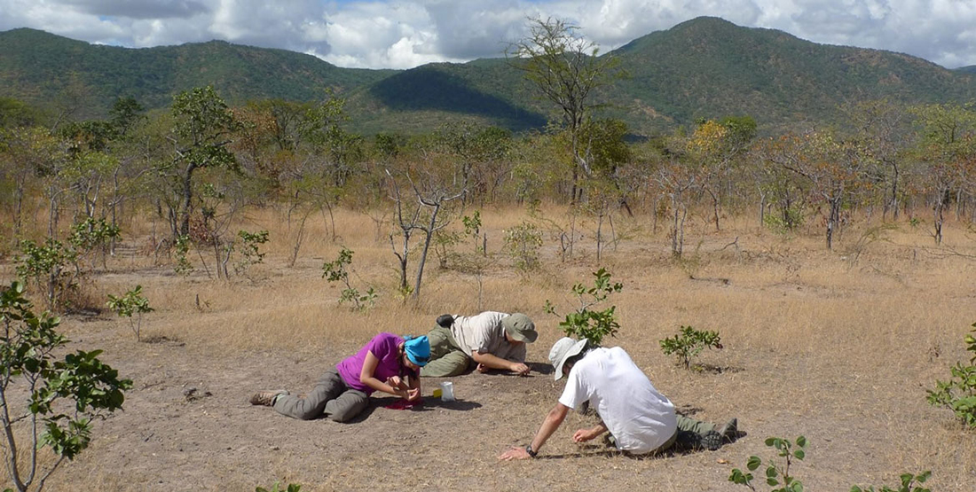 three people kneel on the ground while digging for fossils