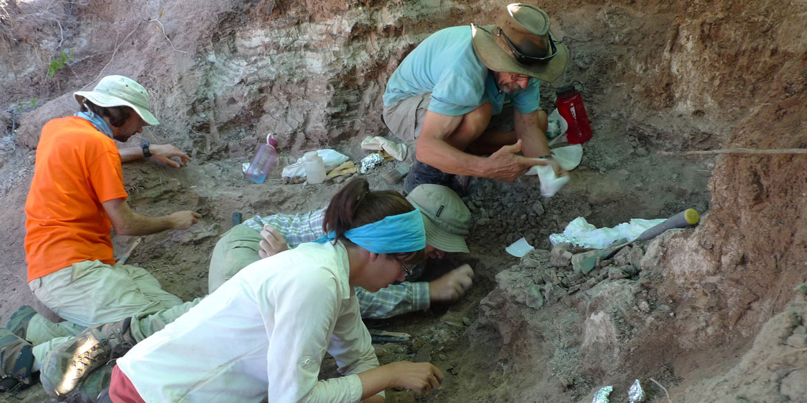 four paleontologists examine rock outcrop while digging for fossils