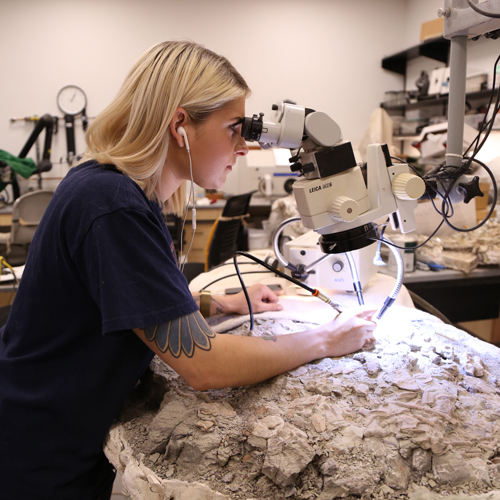 a woman looks through a microscope while removing rock from a large fossil