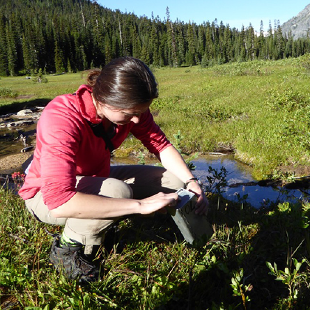Katie Stanchak trapping bog lemmings in the North Cascades