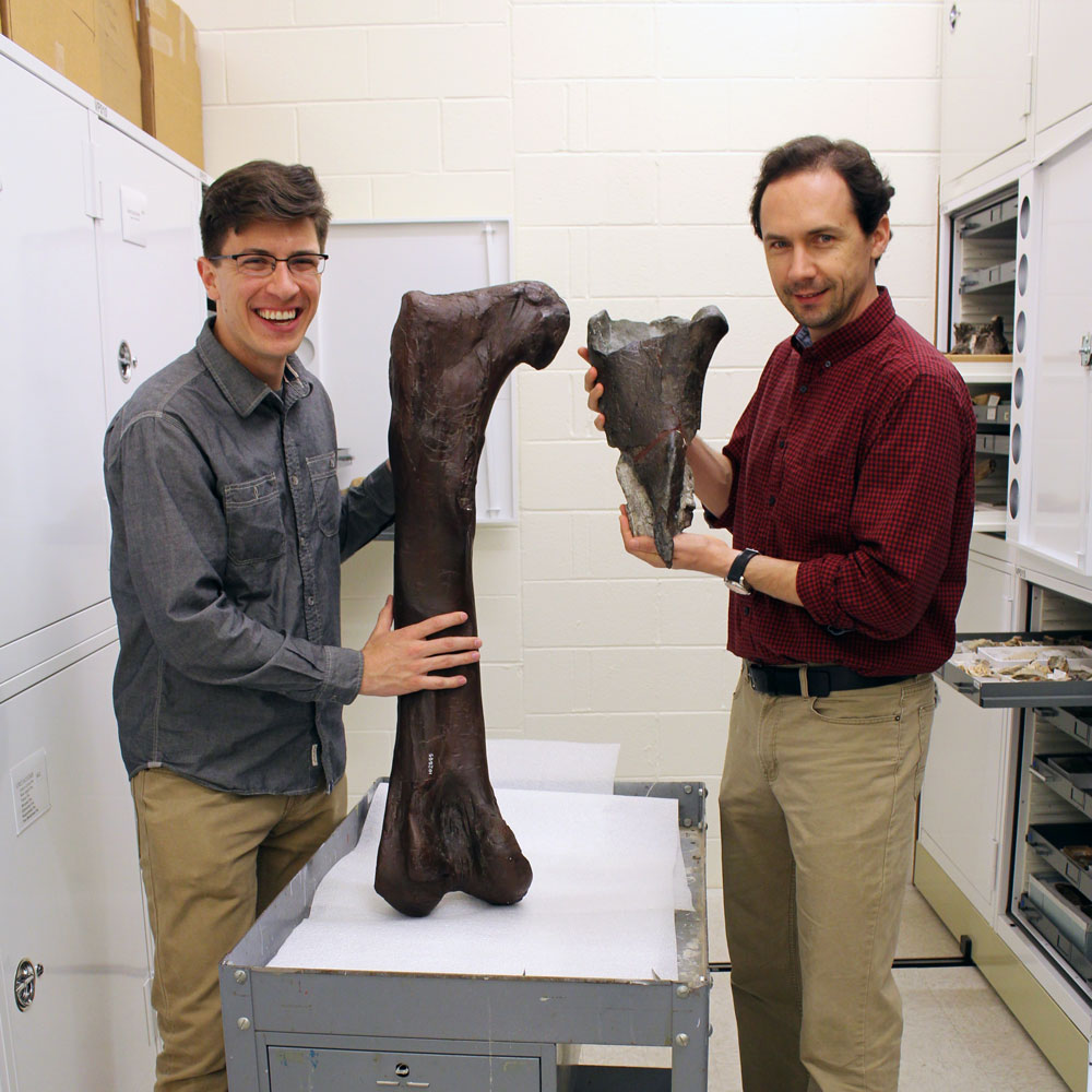 two men stand in collection space -- one holds the fossil and one holds a cast of the full thigh bone