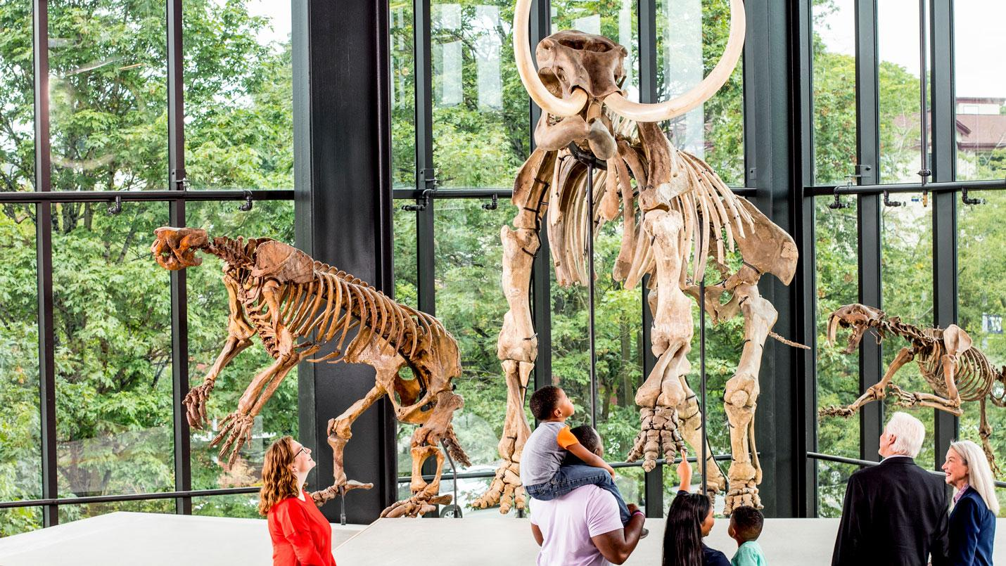 several groups of people look up at a tall articulated mammoth skeleton in the gallery
