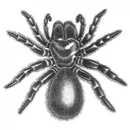 illustration of a spider
